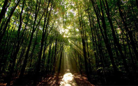 sun, лес, сквозь, солнца, rays, разных, деревьев, ветки, пробиваются,