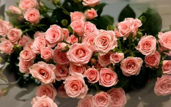 роз, розы, красивые, букет, цветов, букетов, cvety, букеты, букета, розовые, красивых,