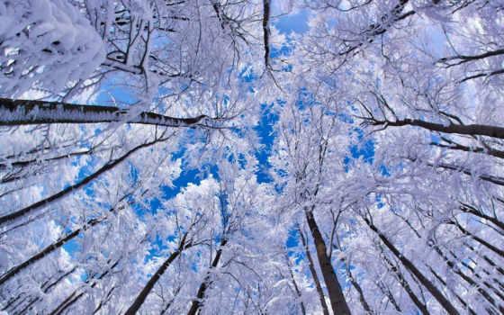 деревья, небо, iarna, кроны, зима, снег, иней, природа, through, looking, trees, изображение, правой, кнопкой,