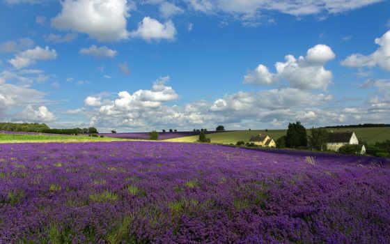 цветы, небо, lavender