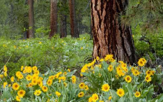 цветы, лесные, под, деревом, природа, цветов,