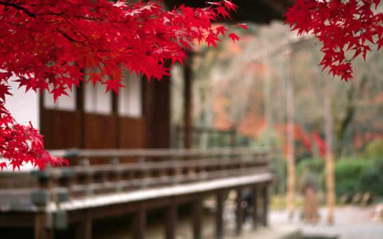 japanese, осень, листва, дерево, branch, landscape, японией, японии, tokio,