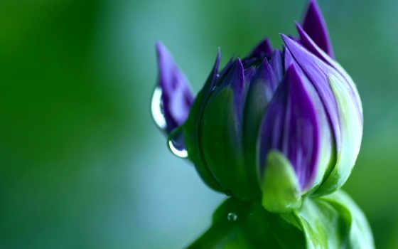 макро, зелёный, цветы, drop, бутон, color, картинка, капли, колючки, кактус, бабочка,