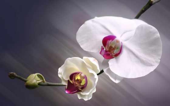 Цветы 20020