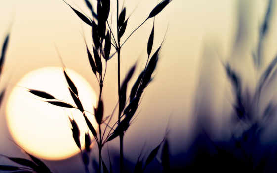 макро, солнце, закат