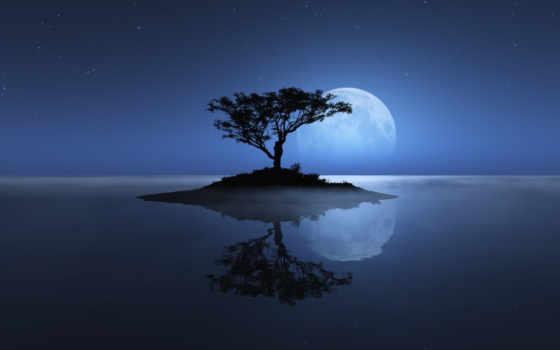 дерево, остров, небо