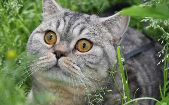 кошки, смотрит