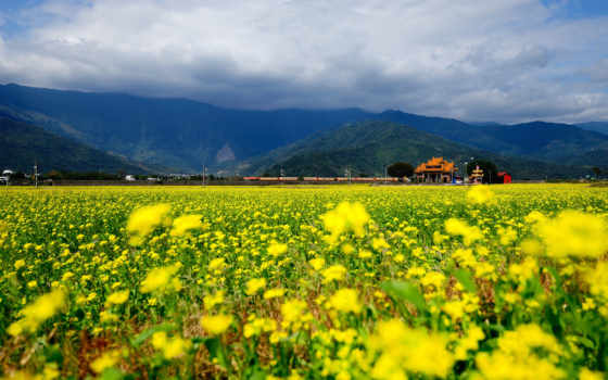 поле, цветы, поезд