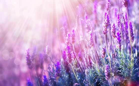 des, business, цветы, фотообои, клип, lavender, выбрать, art, креатив,
