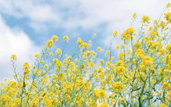 цветы, неба, fone, голубого, полевые, желтые, банка,