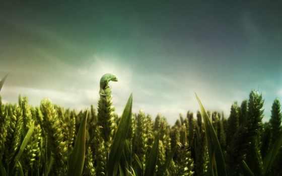 creator, тебя, любит, trigo, campo, world, за, иоанна, отдал, verde,