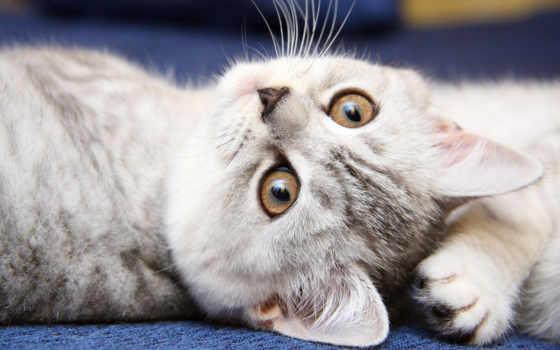 кошки, кошек, красивые