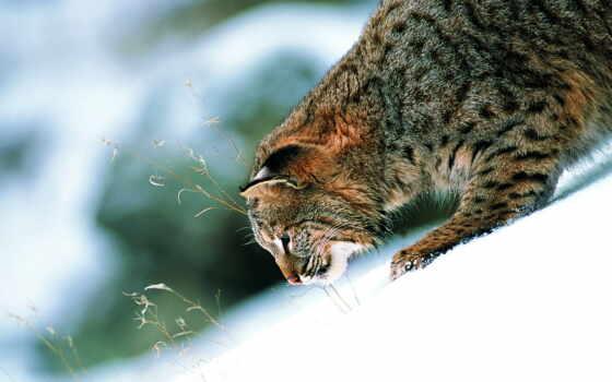 zhivotnye, кошки, животных