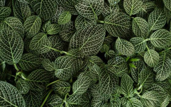 листья, зелёный, plants, images, iphone, растение, top, природа,