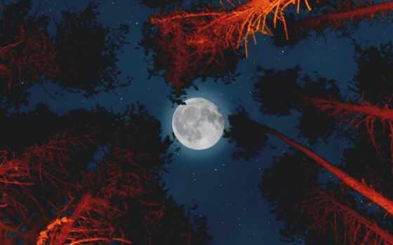 луна, ночь, небо, fore, устройство, mobile, силуэт, starry