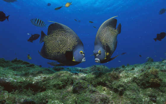 рыбы, морские, рыб