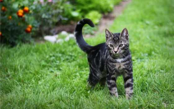кот, striped, котэ, зелёный, трава, котенок,