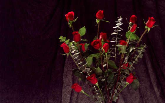 цветы, букет, листва, роз, красавица, капли, нераспустившихс, воде, красивый, просмотров, дата,