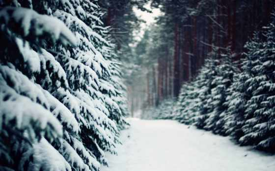 лес, зима, красивая