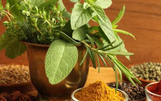 свойства, полезные, basil, приложение, отзывы, растение, basilica, лекарственное, противопоказани, black, раздача,