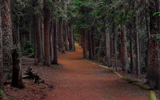 лес, deep, trees, landscape, тропинка, природа, desktop,