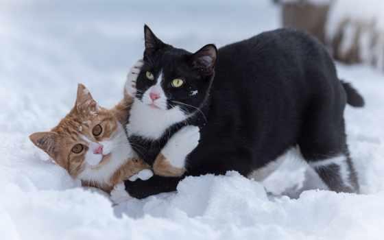 кот, смешные, самые, темы, ногти, снег, mac, cats,