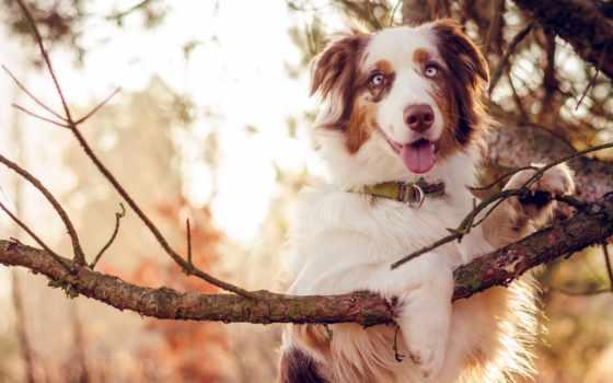 собака, animal, порода, природа, branch