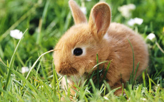 кролик, зайцы