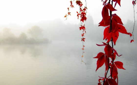 природа, desktop, download, red, осень, beauty, клен, line, желтые, lake, leaf, спокойствие, elegant,