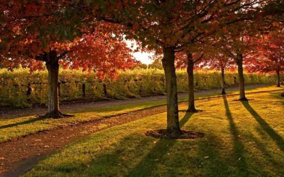 осень, ipad
