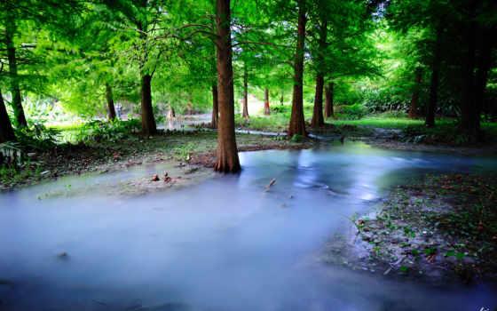 les, priroda, туман, деревя, дымка, iphone, voda,