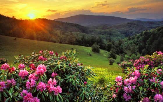 горы, sun, цветы, лучи, summer, трава, холмы, лес, закат, теги, свет,