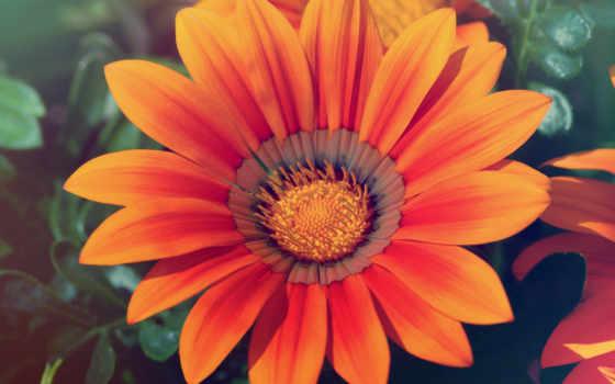 feliz, madres, las, día, dia, цветы, rub, картинка,
