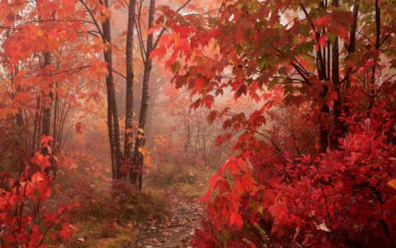 hojas, bosque, rojas, rboles, rojo, fondos, otoño, pantalla, las,