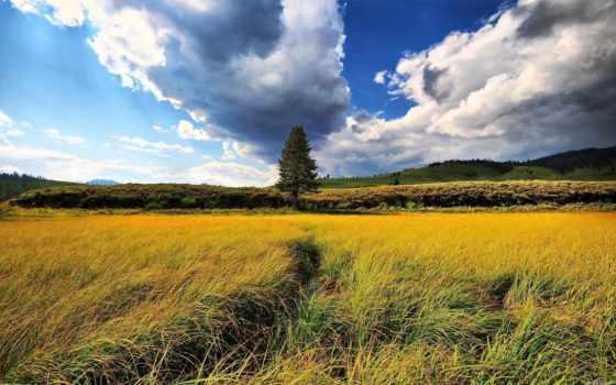 природа, пейзажи -, широкоформатные, trees, margin, красавица, поле, трава, небо, landscape, столешник,