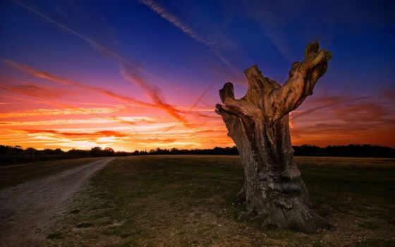 природа, дорога, поле, пейзажи -, игры, есть, коряга, всех, тег,