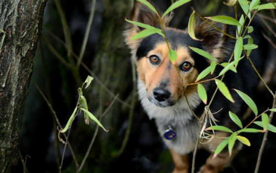 feist, treeing, собака, dogs,