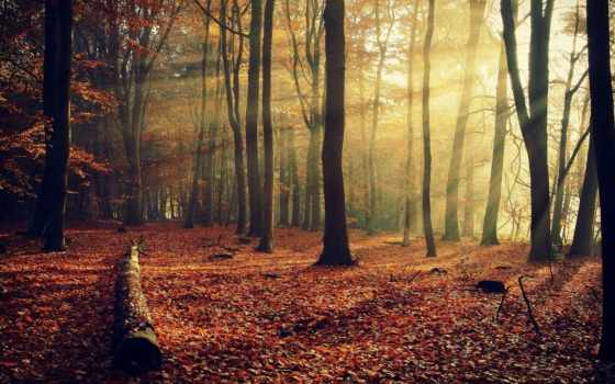 лес, коллекциях, яndex, посмотрите, коллекцию, user, see, collections,