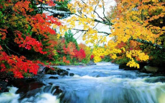 осень, природа, you