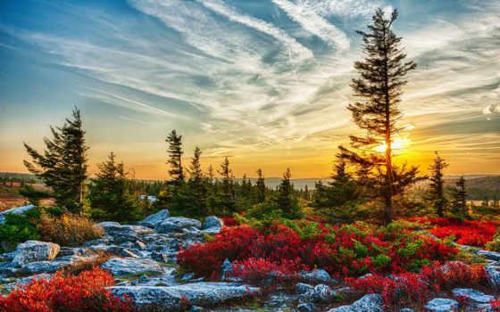 природа, usa, landscape