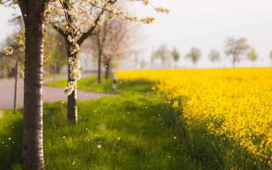 весна, природа, дерево