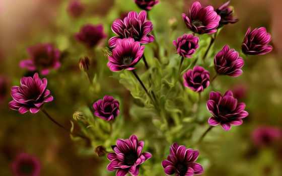 темно-розовые цветы