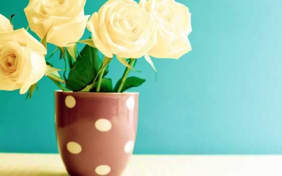 цветы, красивые, розы, flowers, roses, vintage, только, lovejusta, заставки, совершенно,