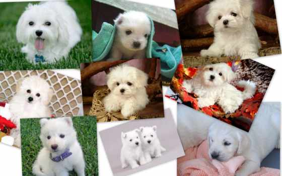puppies, honden, desktop, achtergronden, free, фон,