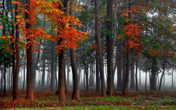 trees, лес, природа, осень, forests, пасть, high, дерево, definition, lovely,