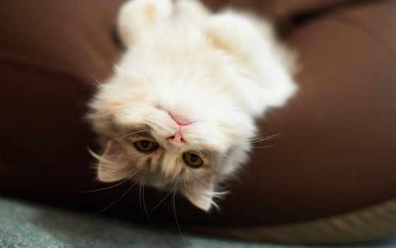 кот, котенок, pinterest, серый, playful, animal,
