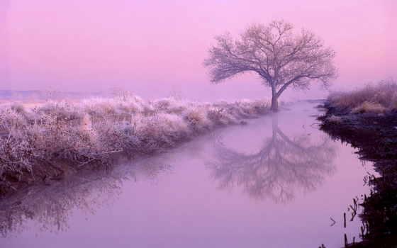 рассвет, река, ночь, природа, лес, розовый, тумане, розовом,