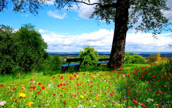 природа, peace, summer, место, работать