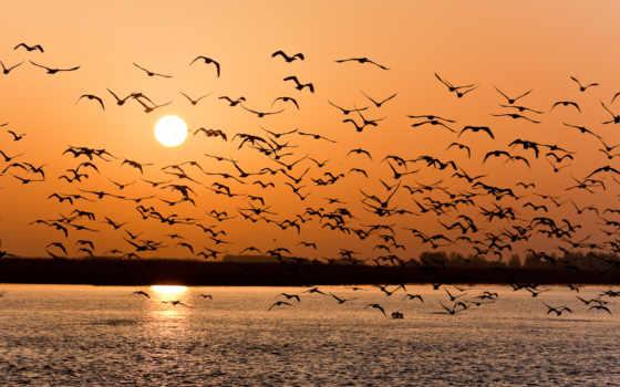 pack, птиц, птицы, закат, озеро,