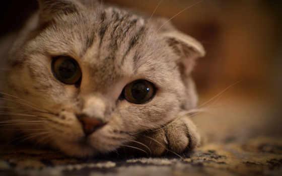 кот, глазами, большими